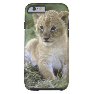 African lion, Panthera leo), Tanzania, Tough iPhone 6 Case