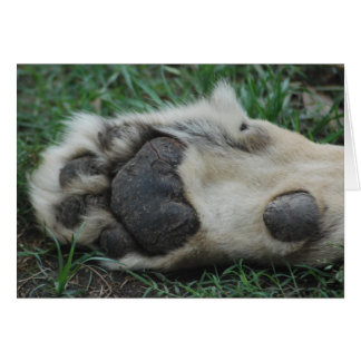 """""""African Lion Paw"""" Greeting Card"""