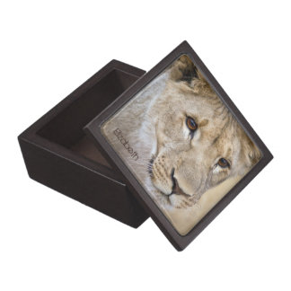 African Lion Personalized Gift or Trinket Box