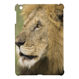 African Lion Portrait, Panthera leo, in the iPad Mini Cases