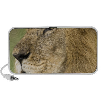 African Lion Portrait, Panthera leo, in the iPod Speakers