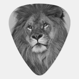 African Lion resting on rock cliff Guitar Pick