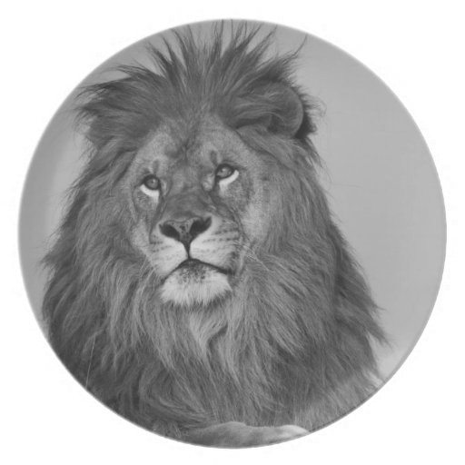 African Lion resting on rock cliff Party Plate
