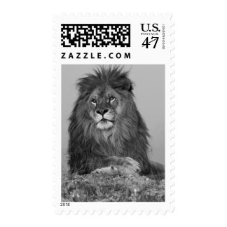 African Lion resting on rock cliff Postage