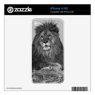 African Lion resting on rock cliff Skin For iPhone 4S