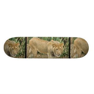 African Lion Custom Skate Board