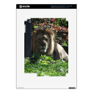 African Lion Decals For iPad 3