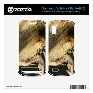 African Lion Samsung Solstice Skins