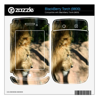 African Lion BlackBerry Skins