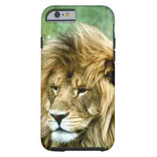 African lion tough iPhone 6 case