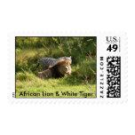 African Lion & White Tiger Stamp