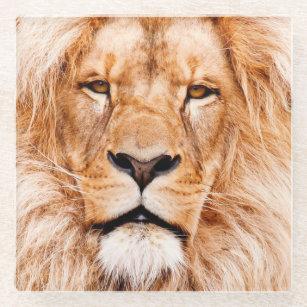 African Lion Wildlife Animal Closeup Portrait Glass Coaster