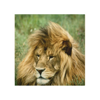 African lion wood wall decor