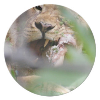 African Lioness Melamine Plate