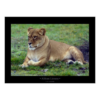 African Lioness Print