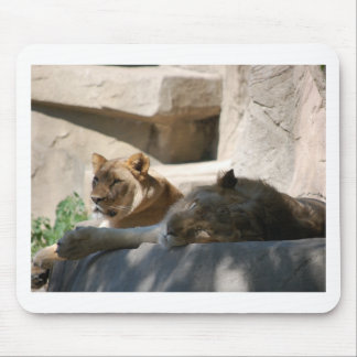 African Lions Mouse Pad