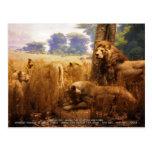 African Lions Postcard