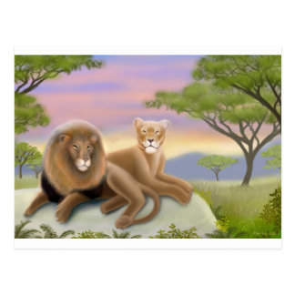 African Lions Relaxing Postcard