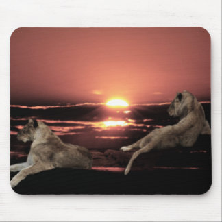 African lions resting at sunset mouse pad