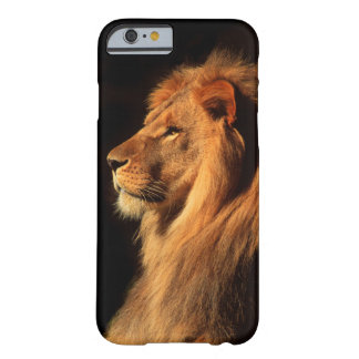 African Male Lion iPhone 6 case by Steven Holt