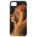 African Male Lion iphone Case by Steven Holt iPhone 5 Covers