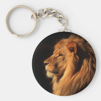 African Male Lion Photographed by Steven Holt Keychain