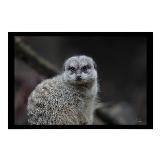 African Meerkat Print