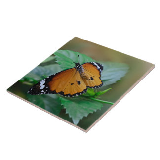 African monarch butterfly hatched out of pupa ceramic tile