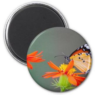 African Monarch butterfly on orange flower Magnet