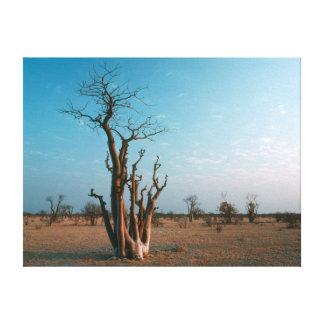 African Moringo Tree On Plain, Etosha National Canvas Print