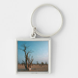 African Moringo Tree On Plain, Etosha National Key Chain