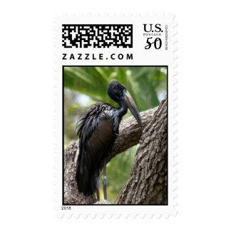 African Open-Billed Stork Postage Stamp
