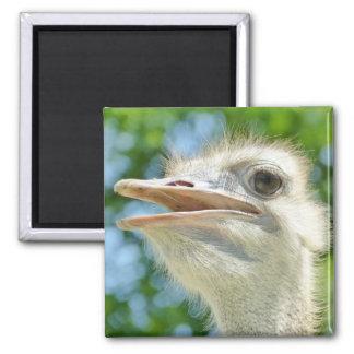 African Ostrich - Refrigerator Magnet