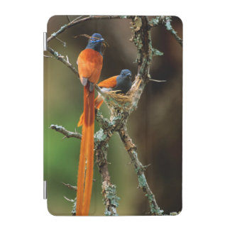 African Paradise Flycatcher 2 iPad Mini Cover