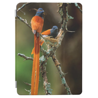 African Paradise Flycatcher 2 iPad Air Cover