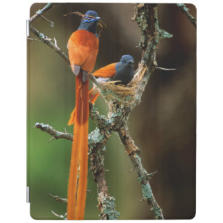 African Paradise Flycatcher 2 iPad Cover