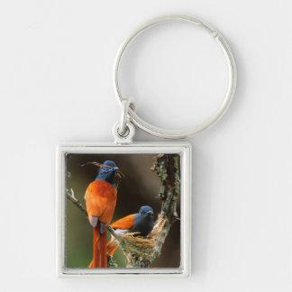 African Paradise Flycatcher 2 Keychain
