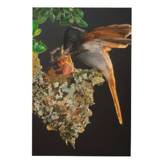 African Paradise Flycatcher Wood Wall Art