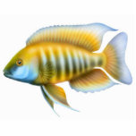 "African Peacock Cichlid Holiday Ornament<br><div class=""desc"">A colorful Jacobfreibergi African peacock cichlid by Carolyn McFann printed on a quality acrylic holiday ornament for Rift Lake cichlid fish lovers. 