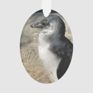 African Penguin Acrylic Ornament