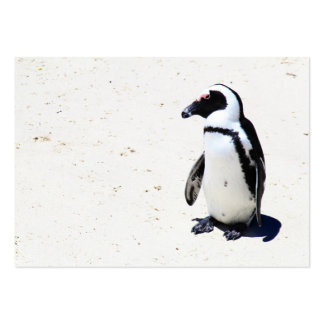 African Penguin at Boulders Beach, Cape Town Business Card Templates