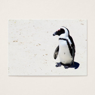 African Penguin at Boulders Beach, Cape Town Business Card