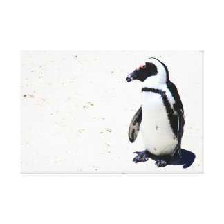 African Penguin at Boulders Beach, Cape Town Canvas Print