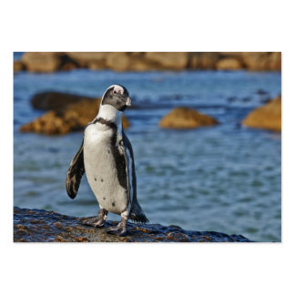 African Penguin, Boulders Beach Large Business Cards (Pack Of 100)