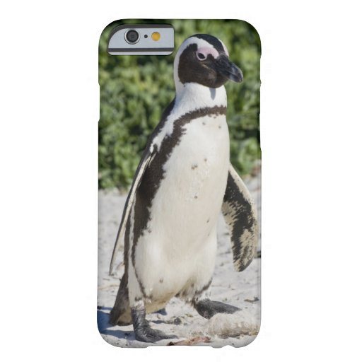 African Penguin, formerly known as Jackass iPhone 6 Case