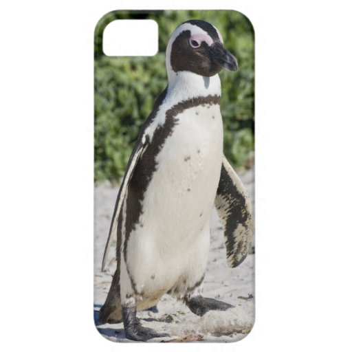 African Penguin, formerly known as Jackass iPhone 5 Cover