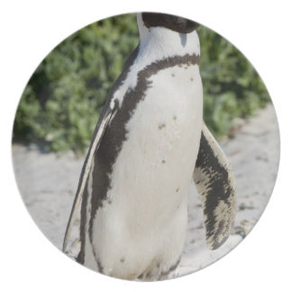 African Penguin, formerly known as Jackass Melamine Plate
