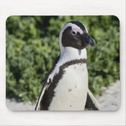 African Penguin, formerly known as Jackass Mouse Pad