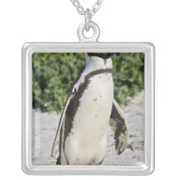 African Penguin, formerly known as Jackass Silver Plated Necklace