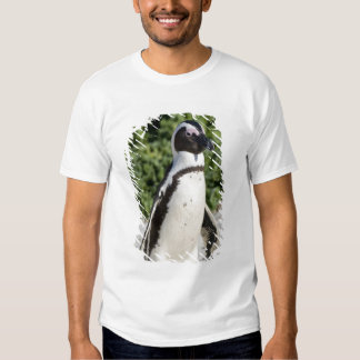 African Penguin, formerly known as Jackass Tee Shirt